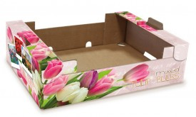 Mixed Tulip Bulbs Verpakking